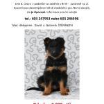 Ztratilo se štěně Baddrock